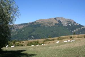 Allevamento Val d'Ozola, Cinquecerri di Ligonchio