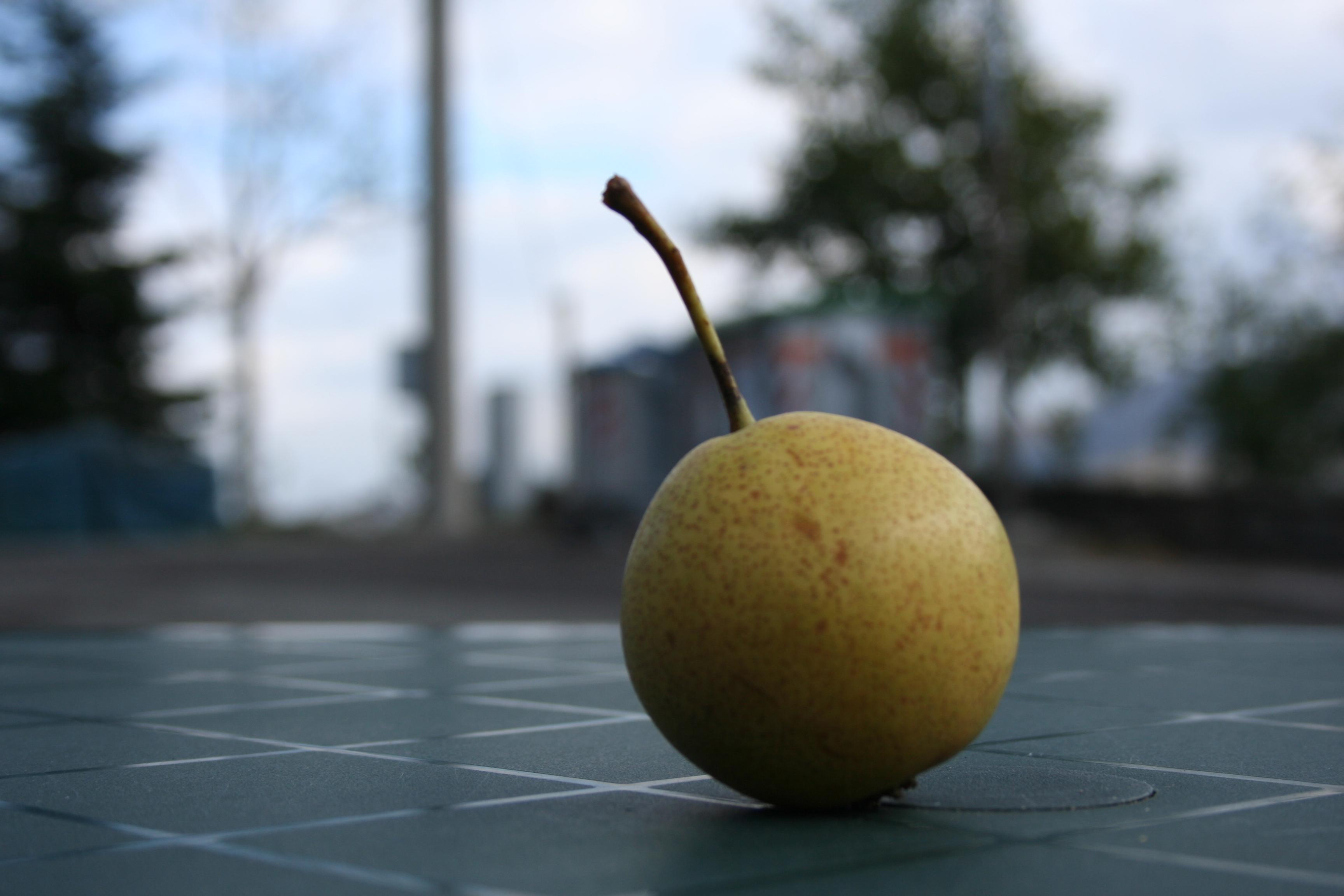 Coltivazione di frutti antichi azienda agricola le for Piante antiche da frutto