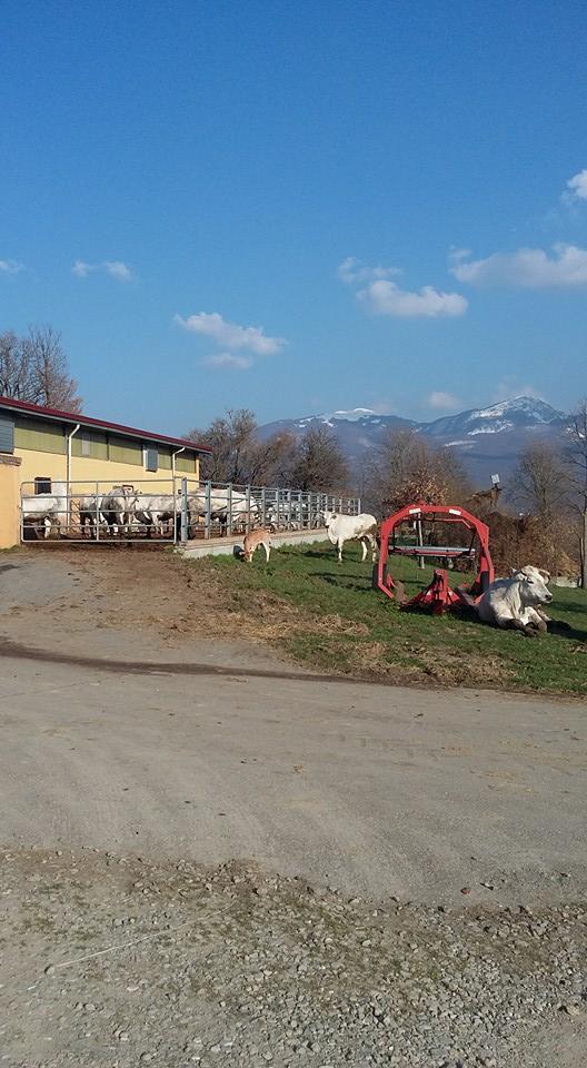 Azienda Agricola Le Comunaglie